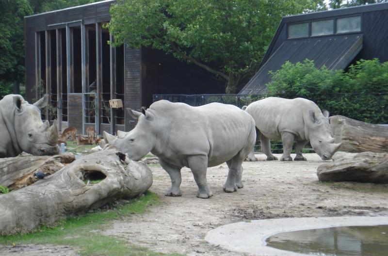 zoo billund aarhus dyrepark