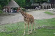 Zoo w Kopenhadze